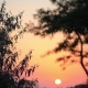 Sunset Through Trees - VideoHive Item for Sale