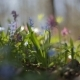 First Blooming Flowers in a Spring Wild Forest. Fresh Grass and Flowers in Spring - VideoHive Item for Sale