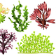 Realistic Sea Weeds Food Set - GraphicRiver Item for Sale
