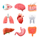 Human Organs Anatomy Realistic Set