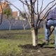 Man Dig a Tree in the Spring Use a Shovel - VideoHive Item for Sale