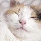 Fragment of a Muzzle of a Fluffy Cat with Eyes - VideoHive Item for Sale