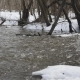 A Small Icy Mountain Torrent After a Frozen Winter Night. - VideoHive Item for Sale