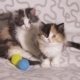 Two Lovely Fluffy Kittens Are Sitting and Watching. - VideoHive Item for Sale