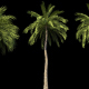 4K Beach Palms Growing Timelapse - VideoHive Item for Sale