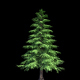 4K Yellow Cypress Tree Growing Timelapse - VideoHive Item for Sale