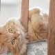 Cute Curious Ginger Cat Lying in Child Bed. Fluffy Pet Poked Its Head Between Rails of Crib - VideoHive Item for Sale