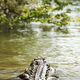 Crocodile In Jungle River - PhotoDune Item for Sale
