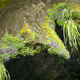 Abstract Nature Background Of Moss And Flowers - PhotoDune Item for Sale
