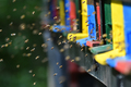 Bees flying around beehive - PhotoDune Item for Sale