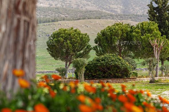 Park in Hierapolis near Pamukkale, Turkey - Stock Photo - Images