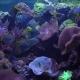 Bright Fish Swim in the Aquarium - VideoHive Item for Sale