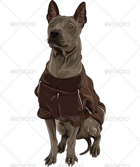 Vector Thai Ridgeback Dog Breed Sitting - Animals Characters