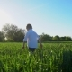 A Little Boy Runs Across the Field - VideoHive Item for Sale