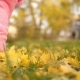 Feet of Baby Walk Along Autumn Leaves - VideoHive Item for Sale