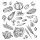 Vegetable and Mushroom Sketch of Fresh Veggies