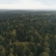 Forest From a Bird's-Eye View - VideoHive Item for Sale