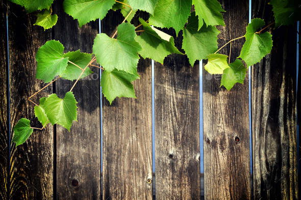 Wooden Background With Grape Leaves Stock Photo By Salajean Photodune