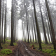 Misty coniferous forest - PhotoDune Item for Sale