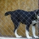 Dog in Cage at Animal Shelter - VideoHive Item for Sale