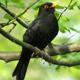 Bird Song 8
