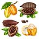 Realistic Cocoa Icon Set