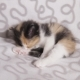 Kitten Licking Paw. Home Small Pet Cat - VideoHive Item for Sale