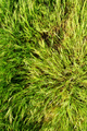 Spring green grass - PhotoDune Item for Sale