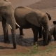 Elephant Family Drinks Water in the River - VideoHive Item for Sale