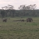 Elephants, Antelopes, Zebras and Monkeys Grazing - VideoHive Item for Sale