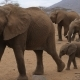 African Elephants With Baby Walking On Park - VideoHive Item for Sale