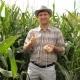 Farmer Twisting Corn Tries Grains On Taste - VideoHive Item for Sale
