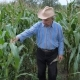 Farmer In A Cowboy Hat Walks Through A Corn Field - VideoHive Item for Sale