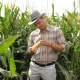 Farmer In A Corn Field, Checks The Crop - VideoHive Item for Sale