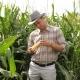 Farmer In A Corn Field, Checks The Crop - VideoHive Item for Sale