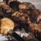 Meat on Grill. Cooking Shish Kebab on Skewers. Cooking Pork Meat on Hot Charcoal.  of Traditiona - VideoHive Item for Sale