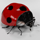 Ladybug - 3DOcean Item for Sale