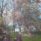 Beautiful Women Enjoying Smell in Spring Park - VideoHive Item for Sale