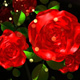 Red Roses - VideoHive Item for Sale