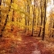 Flight Through Autumn Forest - VideoHive Item for Sale