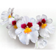 Miltoniopsis Herralexander Flowers - GraphicRiver Item for Sale