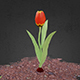 Animated Tulip Flower