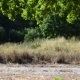 Oak Branches Swaying over the Road - VideoHive Item for Sale