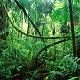 Monkey Jungle Ambience Loop