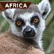 Madagascar Mandihiza