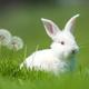 Baby white rabbit in grass - PhotoDune Item for Sale