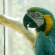 Parrot Macaw Sitting in the Zoo - VideoHive Item for Sale