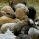 Crowd of Rabbits of Different Colors Sitting in a Paddock - VideoHive Item for Sale