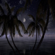 The Moon Between The Palms - VideoHive Item for Sale