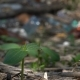 A Green Sprout Grows From a Heap of Garbage on the Ground. Mother Nature Fighting - VideoHive Item for Sale
